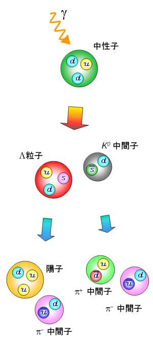 γ線と中性子の相互作用